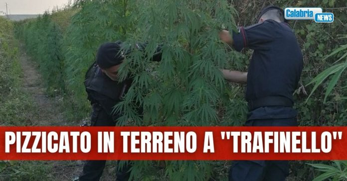 arresto droga Crotone