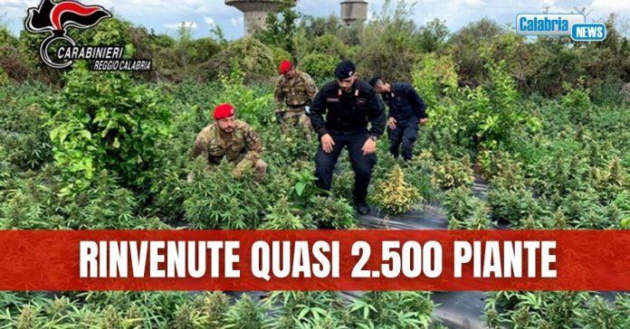 2500 piante a Rizziconi